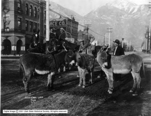 Provo UtahCenter Street p13   With donkeys